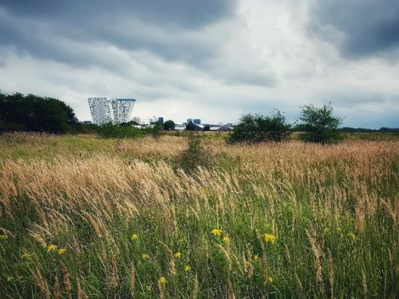 OPINION: Building on Amager Common risks destroying Copenhagen's green image