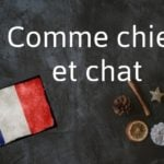 French expression of the Day: Comme chien et chat