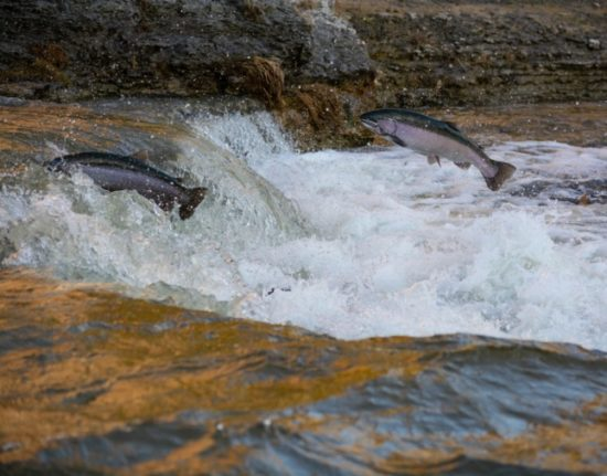 Norwegian salmon farming moves to cleaner indoor waters