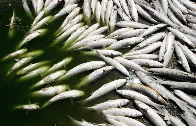 Five stats to understand why Spain's Mar Menor is full of dead fish
