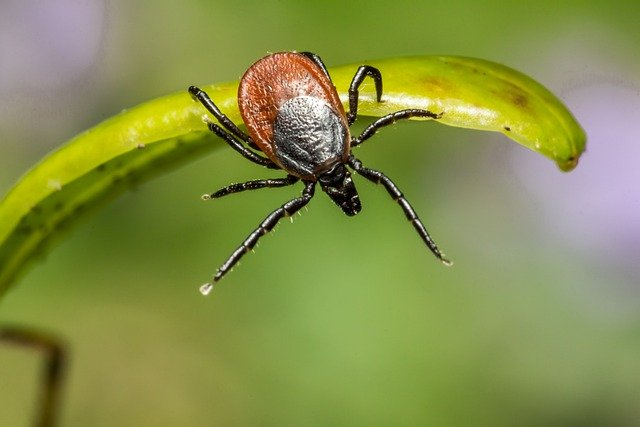 Ticks are proliferating in Spain: How to avoid them and protect yourself
