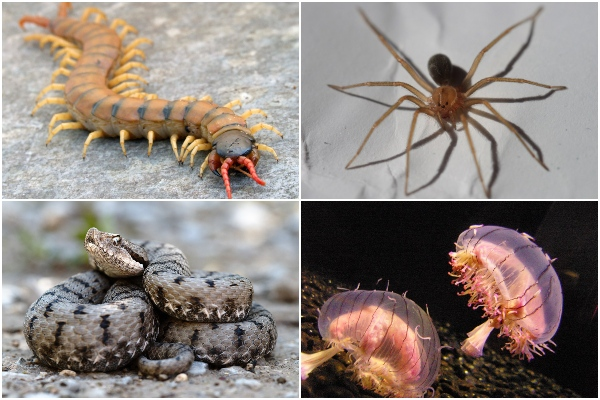 What venomous species are there in Spain?