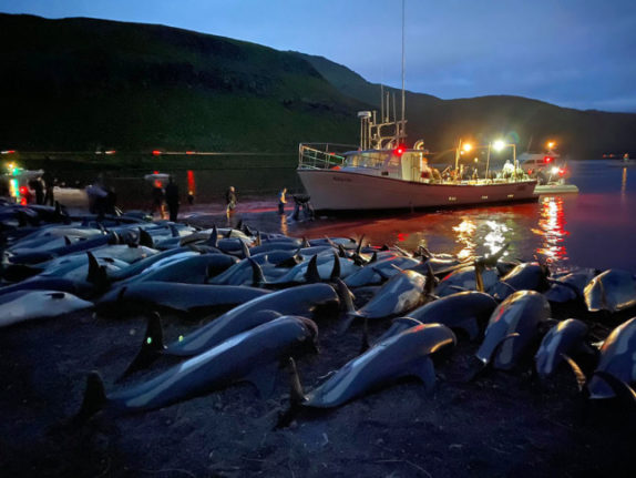 Faroe Islands face outcry after 1,400 dolphins slaughtered in a day